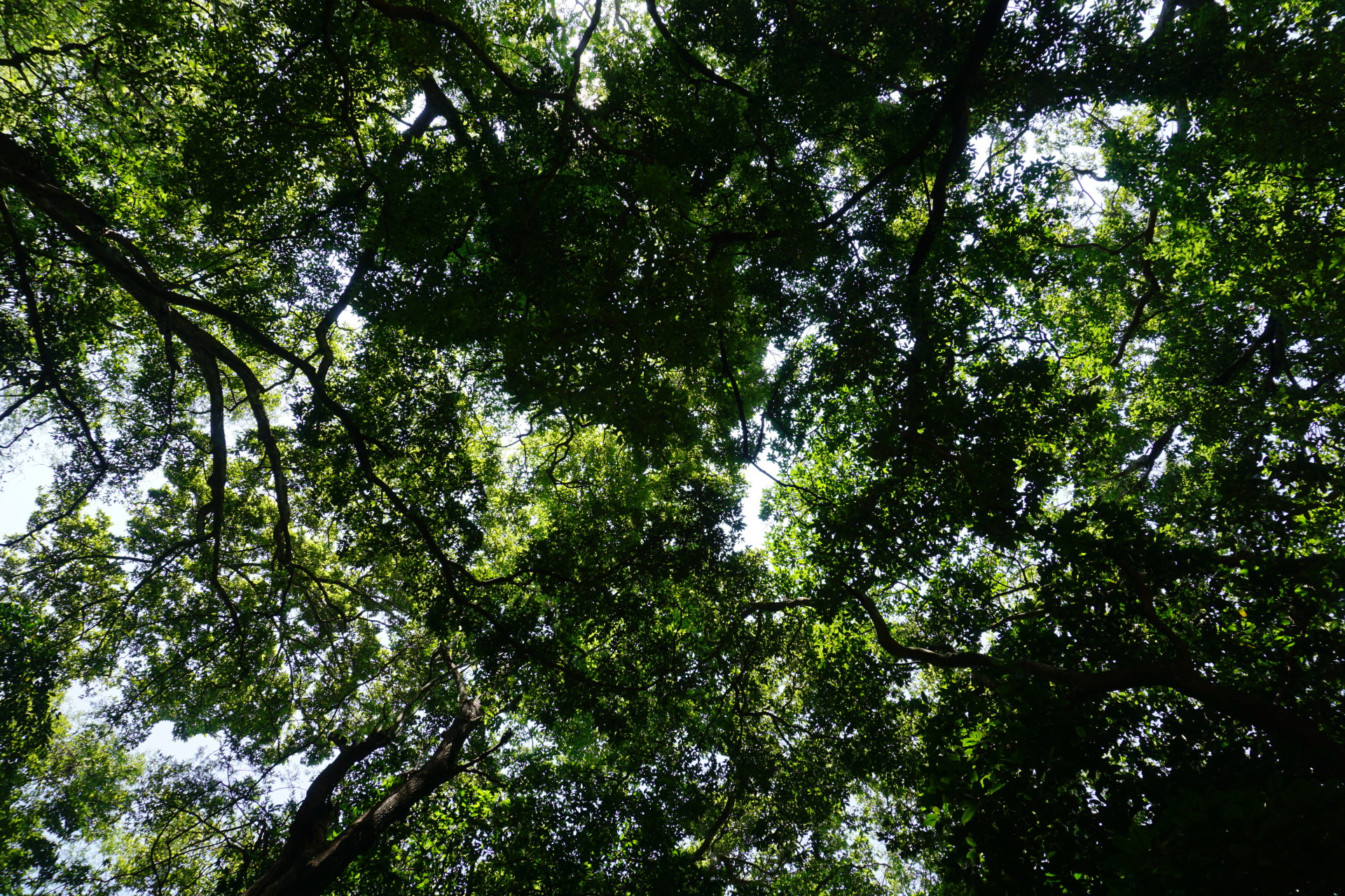 Closed canopy rainforest